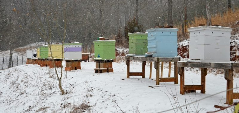 bee hives in winter snow