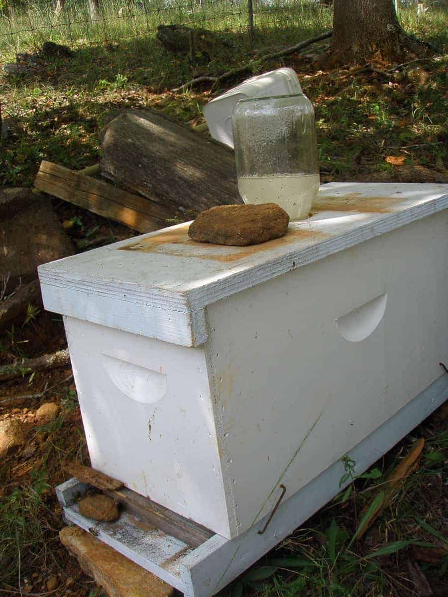 A nuc box with a swarm inside and a jar feeder on top