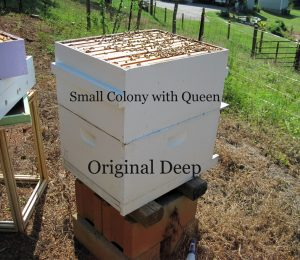 Drone laying queen hive combine. Carolina Honeybees