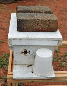 A mini mating nuc can be a useful tool when you find 2 queens in 1 hive. Carolina Honeybees
