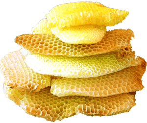 Where does beeswax come from? Bees! . Carolina Honeybees