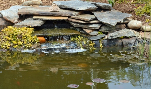 a small water garden provide water for bees