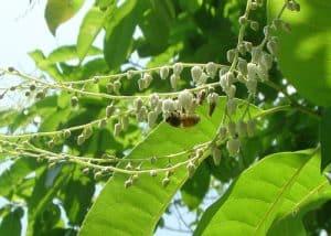 Health benefits of Sourwood Honey - the Jewel of Appalachia Carolina Honeybees