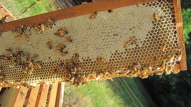 ripe honey on a frame