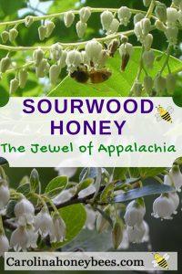 The health benefits of sourwood honey.Sourwood honey is a regional favorite. What is Sourwood honey? Carolina Honeybees