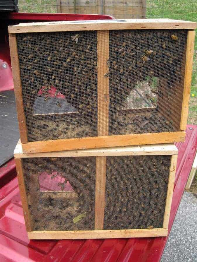 One of the first steps in beekeeping and getting started in beekeeping is ordering your bees. Carolina Honeybees Farm
