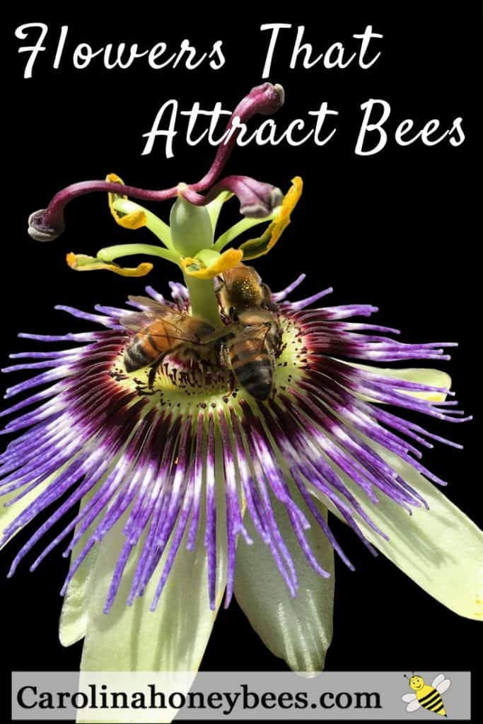 Finding flowers that attract bees - Carolina Honeybees