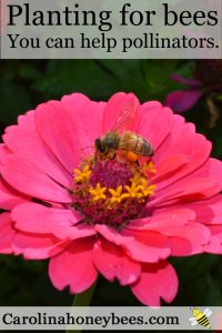 Please choose flowers that are beneficial to honeybees & other pollinators. Carolina Honeybees Farm