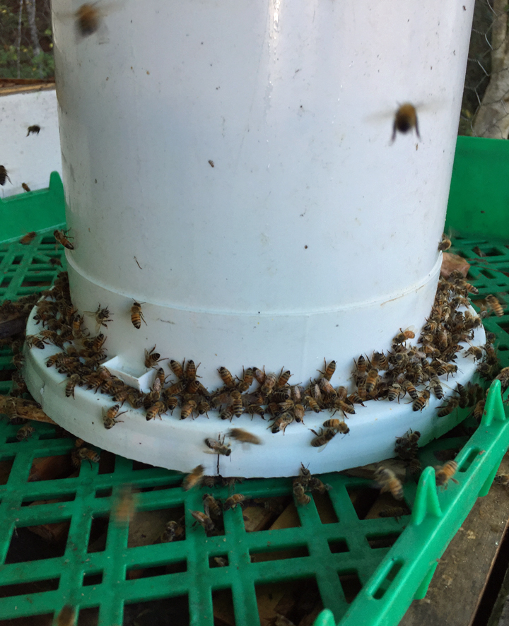 How to Make a Bucket Feeder for Bees