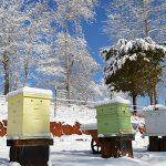 buzzin bees winter quiz Carolina Honeybees