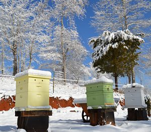 Bee hives in winter look deserted but they are not! Honey bees have a special skill allowing them to survive during the cold months.