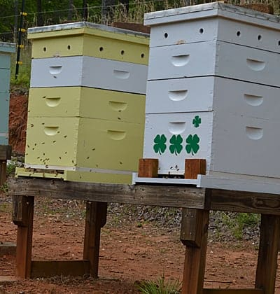keeping bees in a backyard apiary on a wooden stand