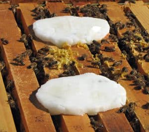Grease patties with essential oils for bees. Beekeepers using essential oils for honey bee management.