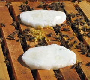 Using Essential Oils for Honey Bees - Carolina Honeybees