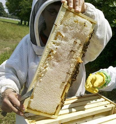 a new beekeeper receiving hive inspection help and beekeeping tips from a mentor