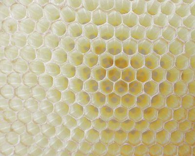 hexagonal cells made by bees