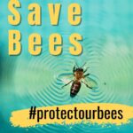picture of honey bee - why we should save bees -protect our bees