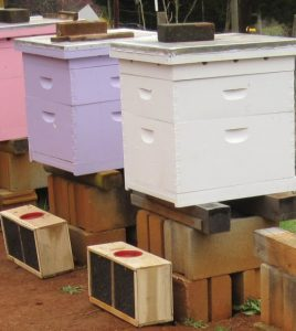 How to start beekeeping with package bees. Carolina Honeybees Farm