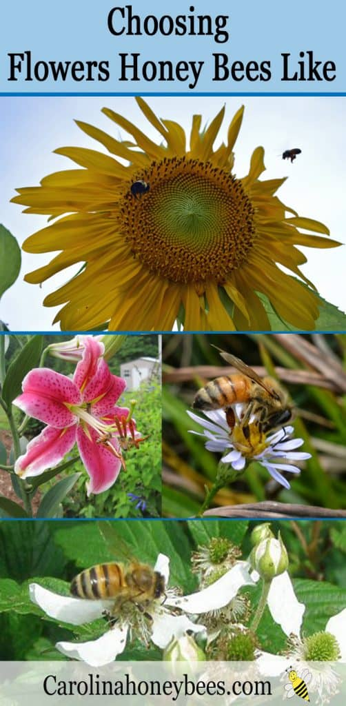 Its easy to choose plants for bees and other pollinators. Buy plants that produce nectar and pollen.