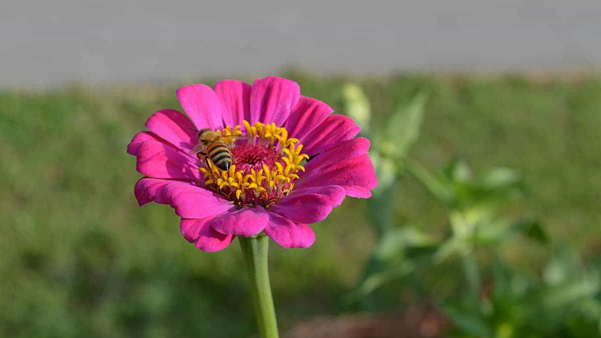 Choose flowers for bees that provide food.. Carolina Honeybees Farm