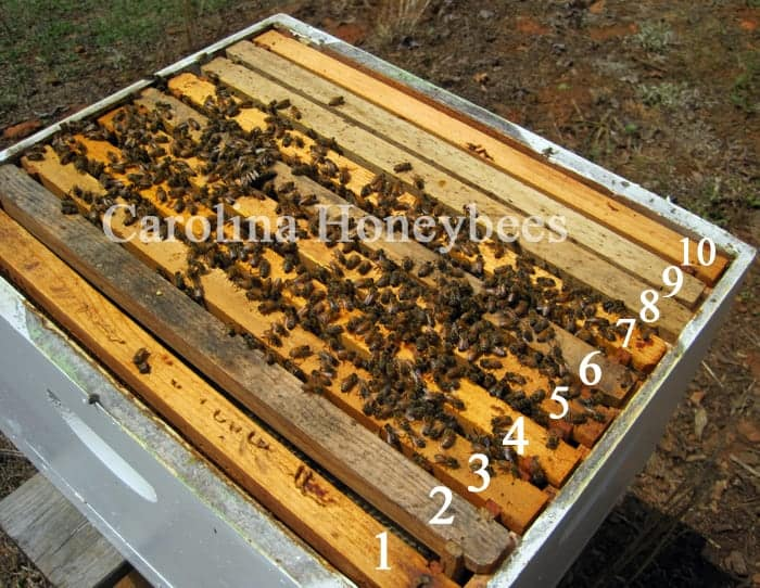 10 frame langstroth hive with numbered frames