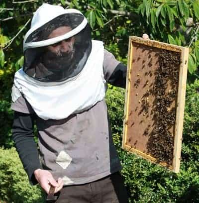 Beekeepers make mistakes that may cause some bees to be on the ground the next day.