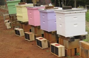 Pastel beehives. Learn how to paint beehives in any colors you want.