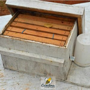 bee box for small ground swarm