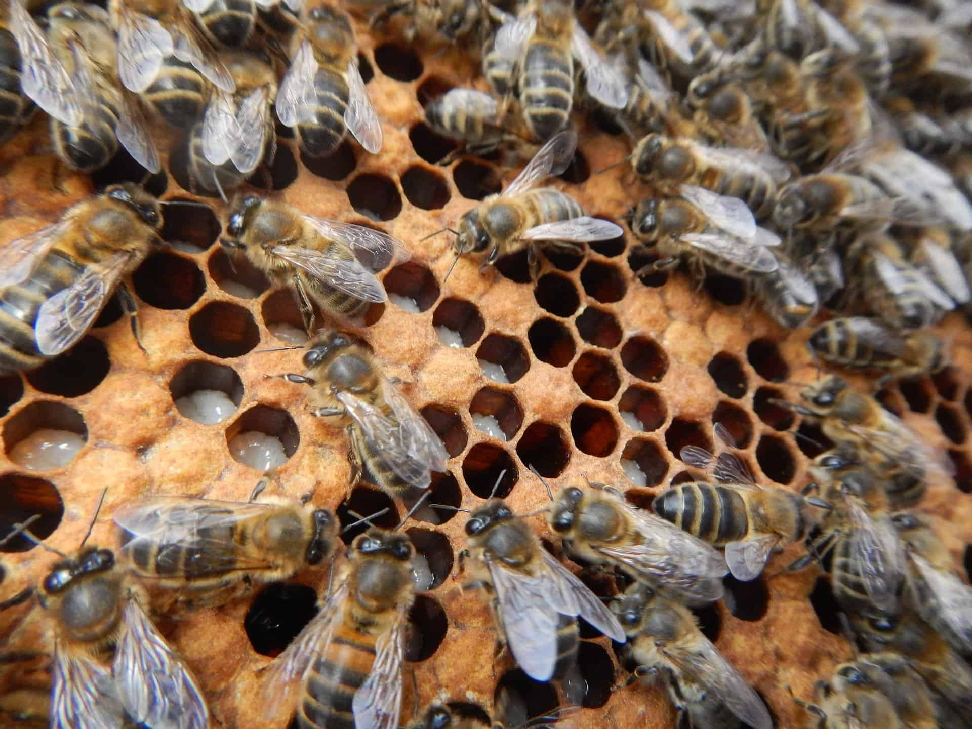 Bee Hive Inspections For Beginners