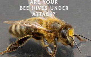 Best Hive Beetle Treatment Options