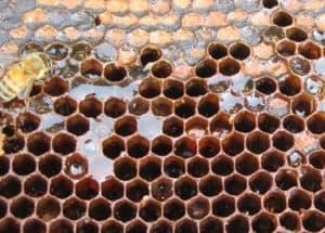 Slime comb from beetle in the bee hive, a larva infestation image.