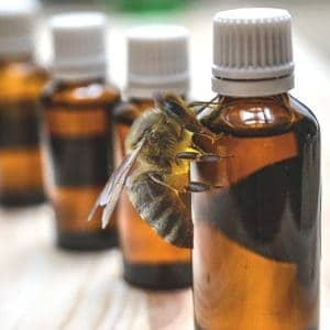 The use of Essential oils is included in the search for the best varroa mite treatment for bees. Carolina Honeybees