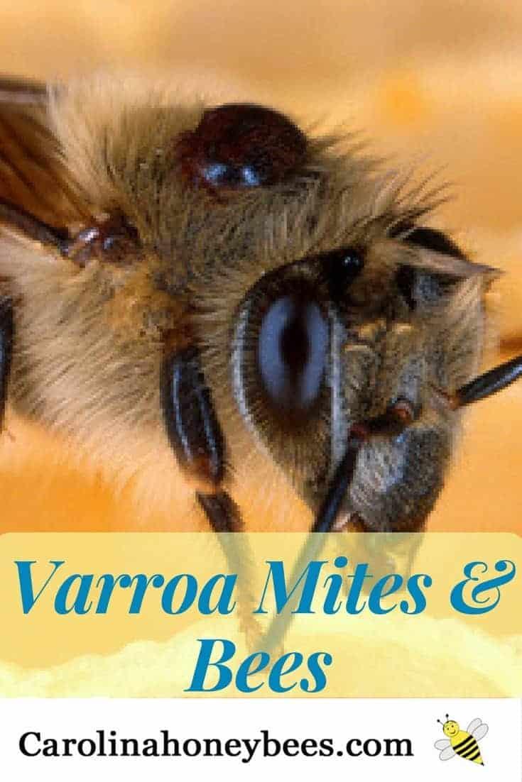 Periodic testing for varroa mites promotes healthier honey bee colonies.