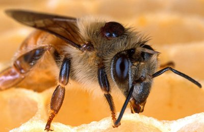 Testing for Varroa Mites is more reliable than visual inspection.