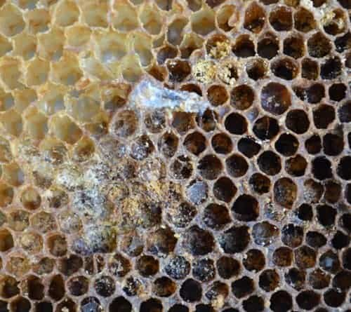 picture of wax moth damage in stored honey frame