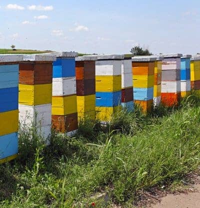 picture of colorful hives in a row at a large beehive business