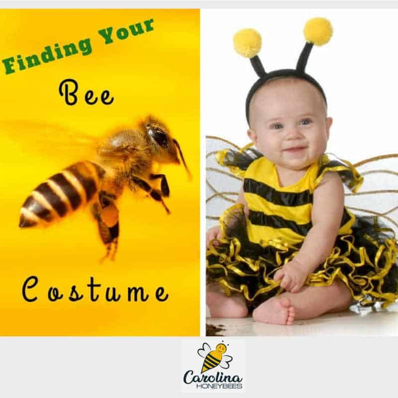 finding your bee costume - baby wearing a bee costume