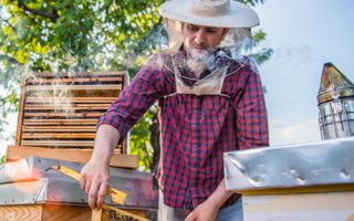 How to Start a Beekeeping Business That Succeeds