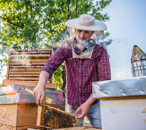 beekeeper inspecting beehive on his bee farm