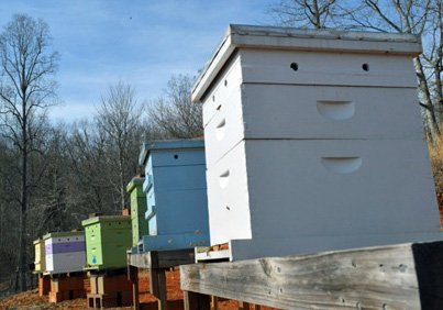 Modern beehives on stands. Understand the function of all the parts of a beehive.