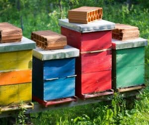 Colorful hives set up in a bee yard to reduce drift by using different colored hives.