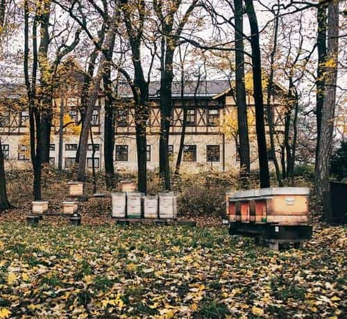 Beehives in a yard. What is the maximum number of hives in one place.