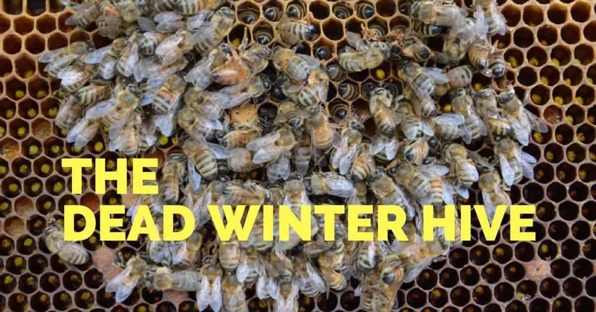 Beehive Deadouts in Winter - Carolina Honeybees