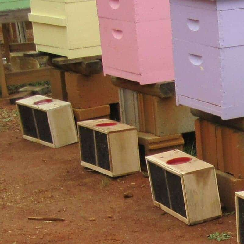package bees the most common option for honey bees for sale ready to install in colorful beehives