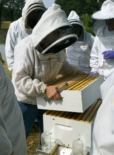 Beekeeper with hive. How many hives does a beekeeper need?