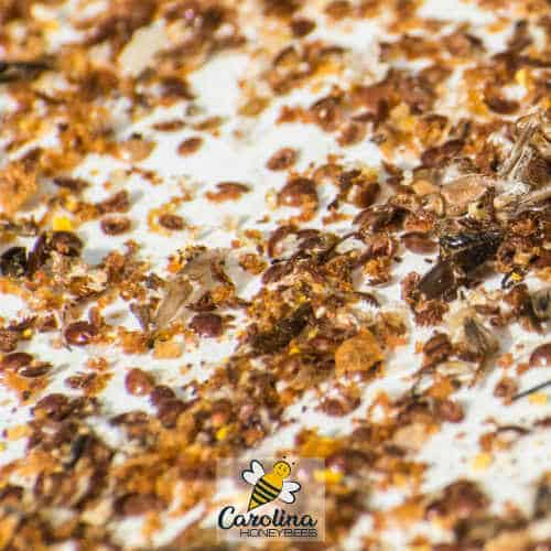 hive debris with dead varroa mites