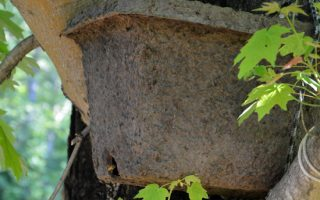 Attracting a Honey bee swarm - Carolina Honeybees