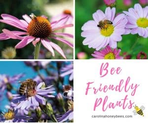 Choosing bee friendly plants for your garden helps all pollinators. Perennial and annuals are good plant sources.