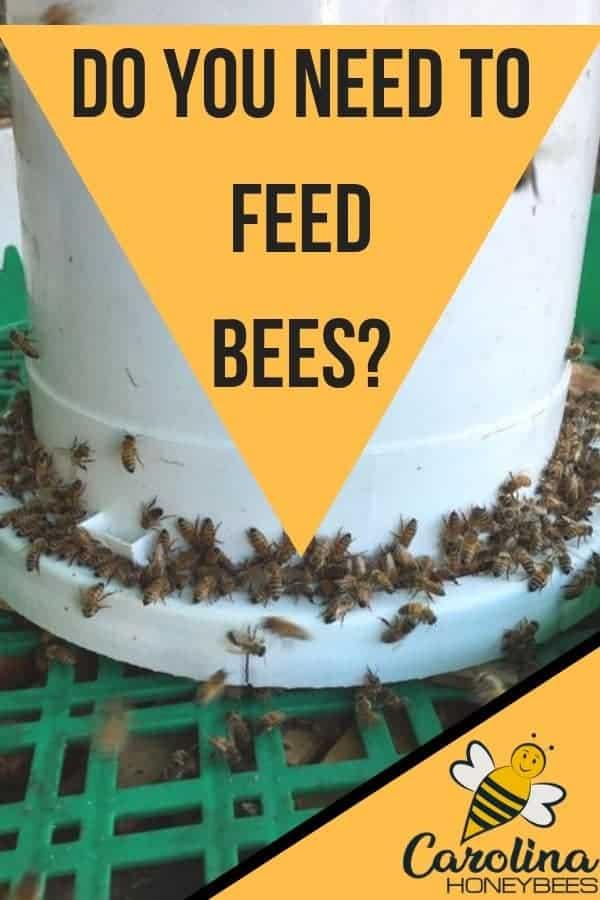 Feeding bees is one way that beekeepers help weak hives.