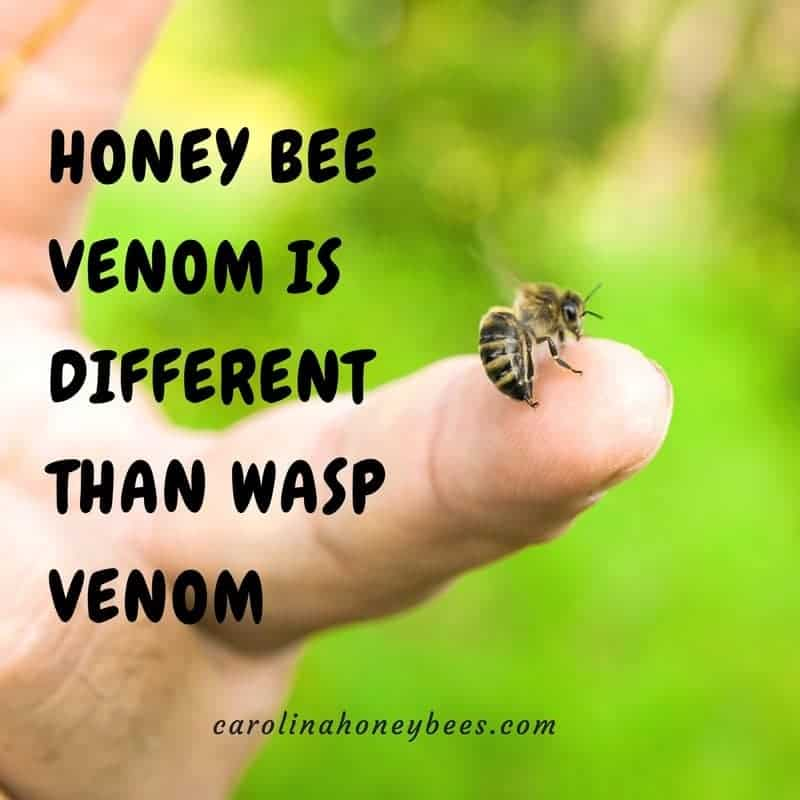 Bee sting. Honey bee facts- venom is different than wasp